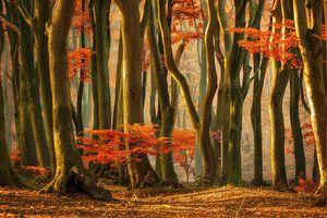 Leaves like fire van Elly Besselink