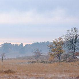 Winter op De Teut van Johan Vanbockryck