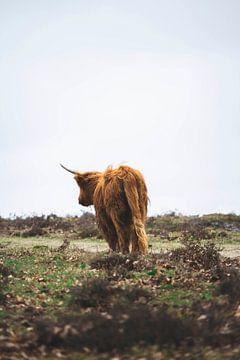 Schotse Hooglander op avontuur  van Shotsby_MT