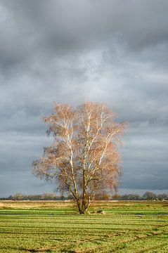 Prachtige boom van Mark Bolijn