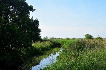 Un ruisseau dans un paysage d'été sur Gerard de Zwaan