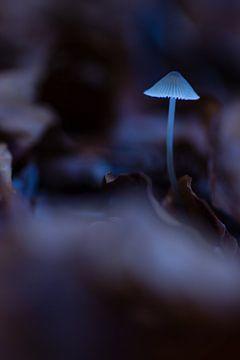 dromerige paddestoel van Martzen Fotografie