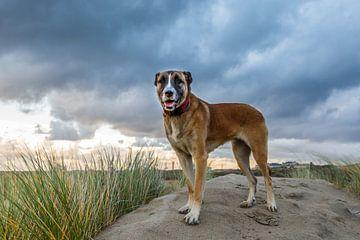 Portret van Hond  van Henk van den Brink