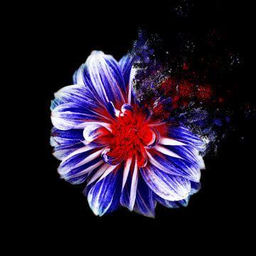 Blumen von Felagrafie .