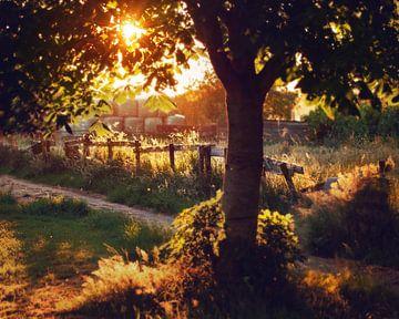 zomeravond op de boerderij sur Hanneke de Vries-Koning