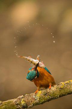 The Catch! von Gerrit van de Velde