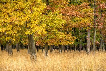 Landschap met herfstkleuren van