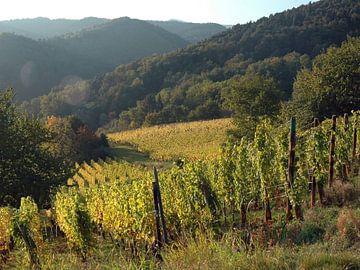 Landschap: Wijngaard in de Elzas, Frankrijk van Koolspix