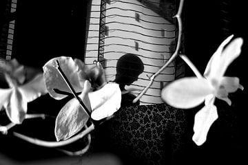 Orchidee nacht von Marianna Pobedimova