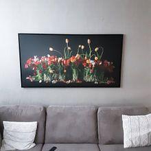 Kundenfoto: Tulpen aus Holland von Dirk Verwoerd, auf leinwand