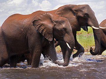 Olifanten die de rivier over steken van Eye to Eye Xperience By Mris & Fred