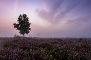 Lonely Tree van Marc Glaudemans
