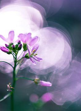 Pinksterbloem in Zonlicht van Arjen Hartog