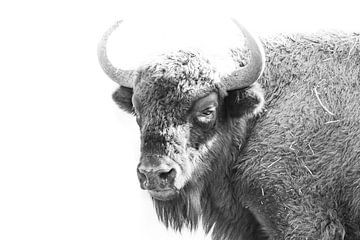 Europäischer Wisent schwarz-weiß von John Stijnman
