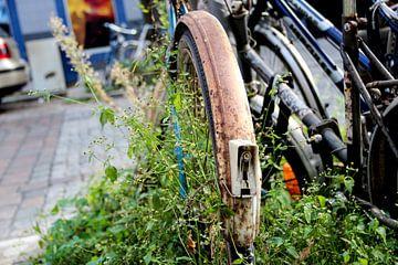 Natuur neemt verroeste fiets over