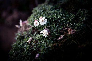 Bloemen van Brummsummse
