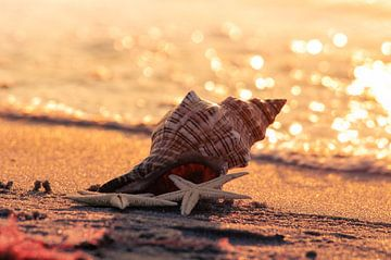 Strand Muschel von Tanja Riedel