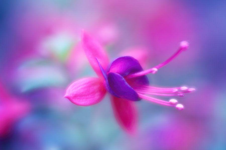 Fuchsia Fantasy....