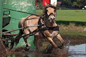 Paard rent door de waterbak.