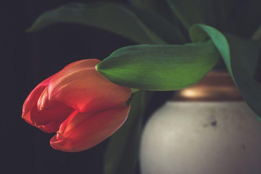 Hangende rode tulp in een klassieke vaas