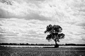 Einsamer Baum von John Bastoen
