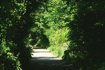 Wanderweg durch den Wald von Bennie Eenkhoorn