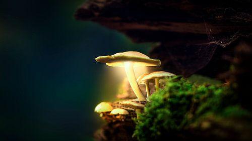 Autumn 2018 Magical Mushrooms