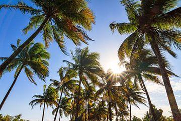 Palmen en zon  van Dennis van de Water