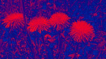 Leuchtenden Blumen van Jenny Heß