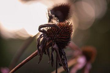 tote Sommerblumen von Tania Perneel