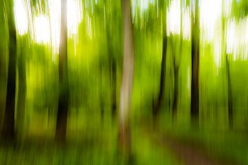 Arbres abstraits au printemps dans une forêt avec un chemin forestier estompé sur Dieter Walther