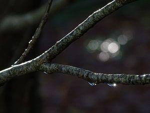 Op een donkere regenachtige herfstdag