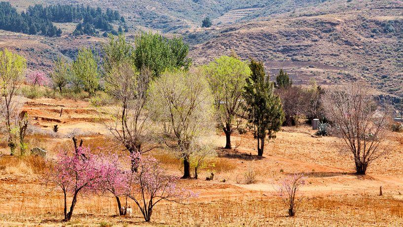 Lesotho van Cor de Bruijn