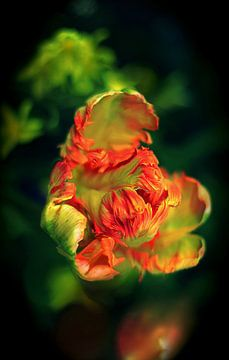 Rood groen tulp van Marianna Pobedimova