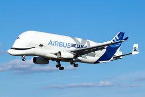 De Airbus Beluga XL gaat landen in Toulouse van Dennis Dieleman