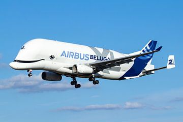 De Airbus Beluga XL gaat landen in Toulouse