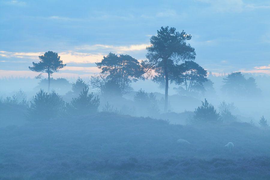 Abstract fog