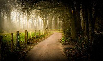kleine pad onder het najaar mist van Fabrizio Micciche