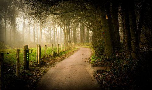 kleine pad onder het najaar mist
