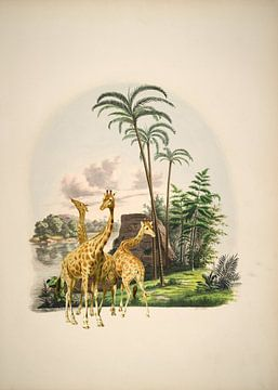 Giraffen in een tropisch paradijs van Andrea Haase