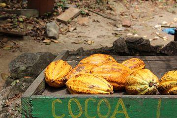 Cacao van
