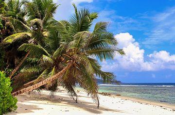 Am tropischen Seychellen Strand im Sommer von MPfoto71