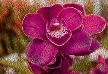 Mooie paarse orchidee van Valeriia T