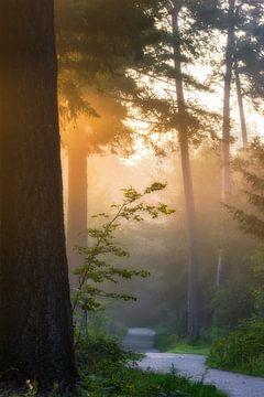 Sonnenstrahlen im Nebel im Speulderbos von Jamesrl Photography