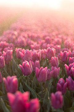 Tulpenveld von AdV Photography