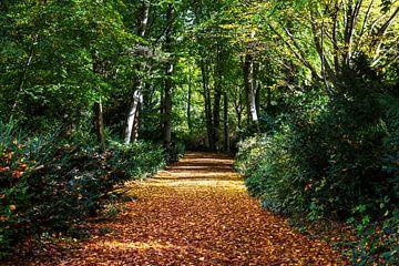 Een pad in het bos in de herfst van Frank Herrmann