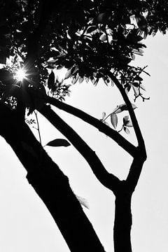 Zonnestralen door boom (zwartwit) van Tot Kijk Fotografie: natuur aan de muur