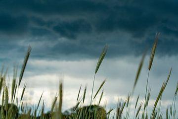 Rogge met donderwolken van Jefry Deuze