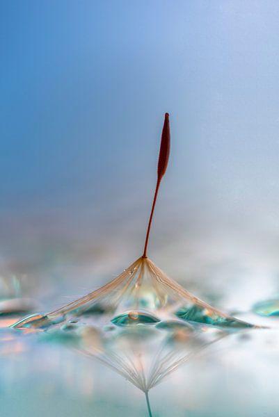 pluisje in blauw van Alexandra Bijl