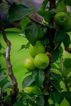 Die grünen Äpfel von Jesse Lamberink